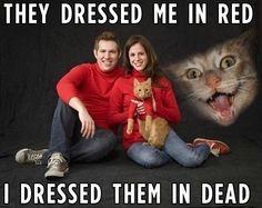 "The Best Of The ""Demon Cat"" Meme"