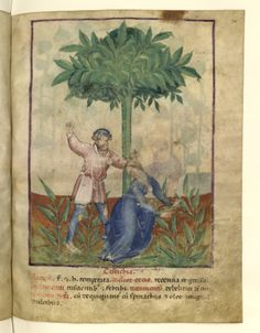 Nouvelle acquisition latine 1673, fol. 36, Couple se disputant. Tacuinum sanitatis, Milano or Pavie (Italy), 1390-1400.