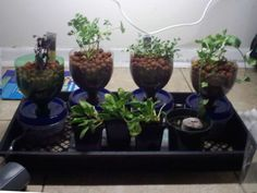 For Adam's Science Fair project...simple, cheap hydroponics system