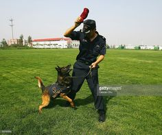 A Chinese Customs official demonstrates how he trains his drug sniffer dog during an open day at a drug sniffer dog training base of China's Customs Anti-Smuggling Office on June 18, 2005 in Beijing. The base trains dogs to detect drugs including marijuana, hashish, heroin, cocaine, opium and methamphetamine hidden in cars and bags.