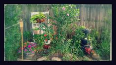Cute little spot in my small side yard. My easy gardening and  yard decorating.