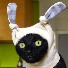 Cute cats with hats. Does your cat have a hat? Sit back and look at funny cats with hats. I Love Cats, Crazy Cats, Cool Cats, Cute Funny Animals, Funny Cats, Cats Humor, Chat Bizarre, Meme Chat, Catsu The Cat