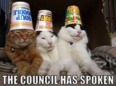 Cat council