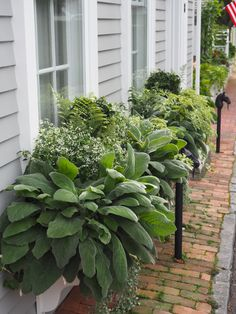 Awesome Plant Combinations For Window Boxes 1 Container Plants, Container Gardening, Succulent Containers, Container Flowers, Vegetable Gardening, Lawn And Garden, Garden Pots, Potted Garden, Potted Plants