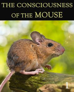 How are mice able to see and communicate in ways that humans cannot?  How does this Mouse Communicate with anything and everything in this Reality?  What is this Mouse's definition for Communication and why does it say that people's definition for the word Communication is limited?...