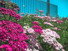 Reportajes de Arbustos. Cuidar de tus plantas es facilisimo.com