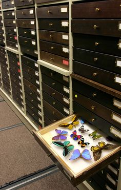 Drawers in the Invertebrate Zoology collection. Image credit: Carnegie Museum of…