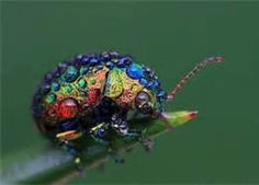 beautiful insects