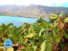 infomatie over wandelen in Griekenland wandelvakantie Griekenland 2021 Fruit, Plants, Abseiling, Plant, Planting