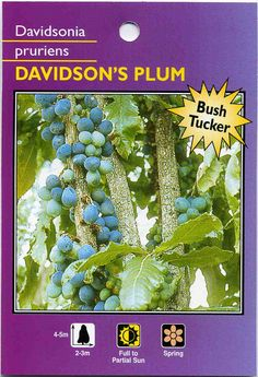 Can be grown indoors when young. Suitable for container planting Australian Plants, Australian Bush, Fruit Plants, Fruit Trees, Rainforest Trees, Native Foods, Native Australians, Plum Tree, Edible Flowers