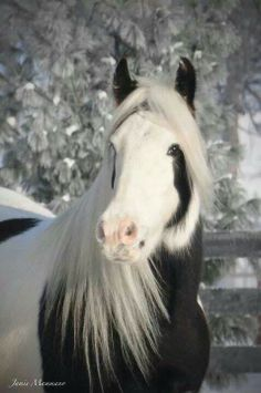 Such a handsome face on this paint horse.