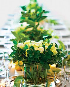 White roses amid a lush bed of greenery