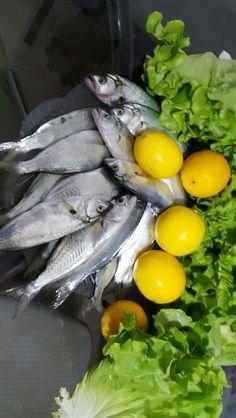 Çinekop mevsim balığı
