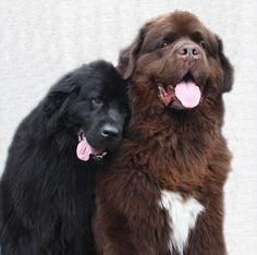My ideal life, I couldn't find an exact picture of what I wanted but here is a section of it. When I'm older I want 3 Newfoundland dogs! A black, a brown, and a white. THEY ARE ADORABLE. I also want to have 3 kids! A big house full!