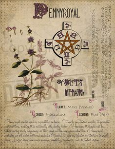 Magic plant knowledge has a long history and has a place in the modern witches Book of Shadows. Magic Herbs, Herbal Magic, Magick Spells, Witchcraft, Grimoire Book, Witch Herbs, Def Not, Modern Witch, Practical Magic