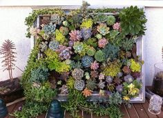 """Photo:luna-see.com To make this living artwork, the homeowners stapled chicken wire to the back of an old frame, then nailed wood strips along the edges to create a shallow planter. After filling the """"garden"""" with spanish moss and cactus soil, they nailed on a plywood backing, flipped it over, and planted a selection ofsucculentsin between the chicken wire for a stunning display. RELATED: Growing Up - 10 Inventive DIY Vertical Gardens"""