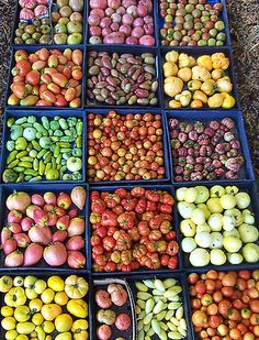 Would love to go to this tomato sale! Love Apple Farm's Annual Tomato Seedling Sale.