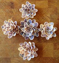 Monet-Seerosen Muschel Blumen für Ihren von ChesapeakeStreet