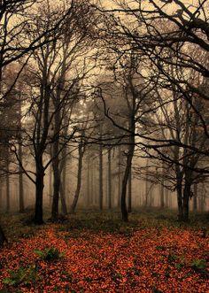 trees forest autumn mist Woods woodland autumn leaves
