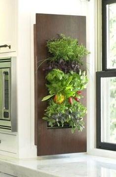 An edible living wall in the kitchen. If you're looking for a unique focal point in your outdoor living area or indoor area even, a living wall is a great solution. #livingwallsoutdoor