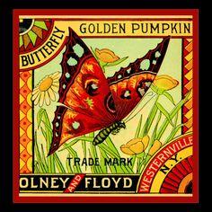 Olney & Floyd (Imperial Plums, Vintage Fruit Crate Label Art Postcard from Zazzle.com) fruit crate, vintag seed, butterflies, etsi shop, vintag crate, pumpkin, vintage crate labels, label art, crates