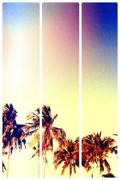 #sun #palmtree #summer