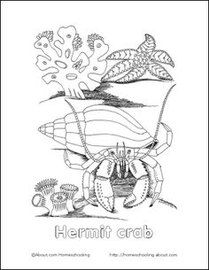 Coloring Sheet Of Happy Crab Crab Pinterest - hermit crab coloring pages printable