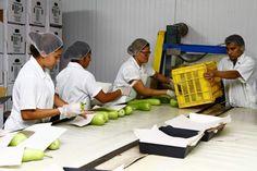 Honduras: Oferta laboral crece en 50% en primeras dos semanas de 2016  Las autoridades de la Secretaría de Trabajo informan que el 80% de las vacantes recibidas son para hombres. Los salarios que se ofrecen no son competitivos. El comercio, alimentos y medicina son los que más empleos han ofrecido en las primeras dos semanas del año.