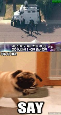 Pug be like funny pics, funny gifs, funny videos, funny memes, funny jokes. LOL Pics app is for iOS, Android, iPhone, iPod, iPad, Tablet