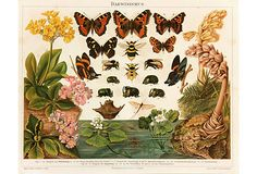 """Antique color stone lithograph of butterflies and insects illustrated in their natural environment, circa 1890. Titled Darwinismus (Darwinism). Displayed on a white mat with a gold border that fits a standard-size frame. Archival plastic sleeve and Certificate of Authenticity included. Artwork, 11.25""""L x 8.75""""H; mat, 16""""L x 12""""H."""