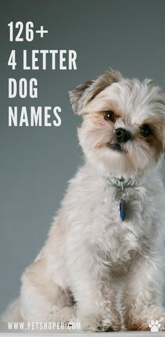 So do you like short names? Are you looking for 4 letter name for your dog? Great! Today we have got a great list with names 4 letters only! #4LetterDogNames #DogNames Cool Dog Names Boys, Unique Female Dog Names, Pet Names For Dogs, Girl Dog Names, Best Dog Names, Puppy Names, Pet Dogs, Dogs And Puppies, Pets