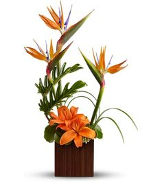 Tropical flowers from your local Clearwater Florist. Hassell Florist in Clearwater, Florida Tropical Flowers, Tropical Floral Arrangements, Modern Flower Arrangements, Exotic Flowers, Silk Flowers, Beautiful Flowers, Exotic Birds, Summer Flowers, Lotus Flowers
