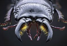 "escapekit: "" Amazing Macro Photos of Bugs Stockholm-based photographer John Hallmén captures amazing macro shots of insects. Beetle Insect, Insect Art, Popular Photography, Macro Photography, Photography Magazine, Scary Bugs, Fotografia Macro, Macro Shots, Creature Design"