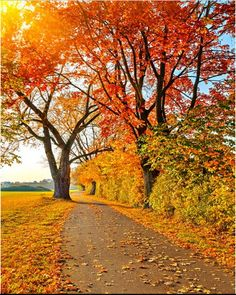 Autumn Maple Trail Sunshine Backdrop Photography by katehome2014