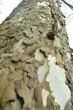 Tree Bark by TheInspiredLens on Etsy, $10.00