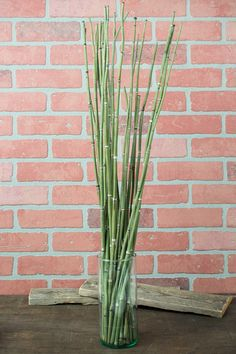 Natural Horsetail Reed Bundle x25 Green Horse Tail Plant, Horsetail Reed, Save On Crafts, Artificial Plants, Flower Arrangements, Grass, Natural, Gardening, Living Room