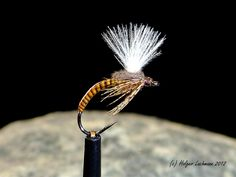 Quill body cdc emerger #2