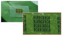 Un chip fabricado de nanocelulosa casi totalmente biodegradable  Tecnología ecologico procesador tecnología