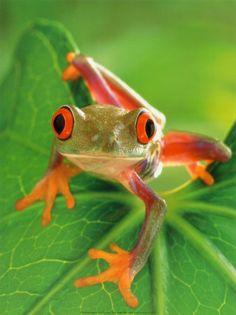 http://1.bp.blogspot.com/-y84IfzwyUEI/Tzwfuhae7SI/AAAAAAAAAlI/2Nlo2qLitvg/s1600/frog.jpg