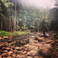 Entered by @asherbatch (Asher Batch) in the Hooroo Best Holiday Snaps competition. #nlhoorooholiday #mttambourine #rainforest #waterfall #stream #pretty #qld #roadtrip #lol @melllsworld