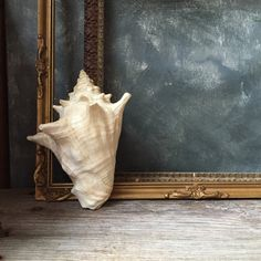 Vintage Conch Shell: Nautical Beach Style, Conch Seashell, Wedding Decor, Home Decor