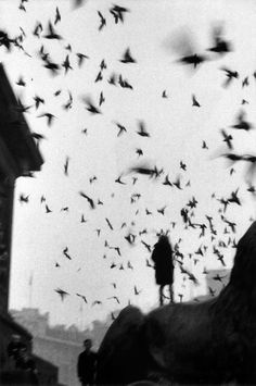 London- Sergio Larrain-1959. Imagine standing where the subject of this photograph is standing and how silencing and awe-inspiring seeing a bird formation like this happening right in front of you.