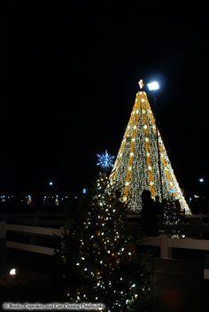 National Christmas Tree 2015 - Washington, DC | Books, Cupcakes, and Cats Chasing Chipmunks