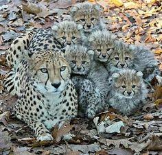 Os animais têm mais harmonia em família do que os seres humanos!