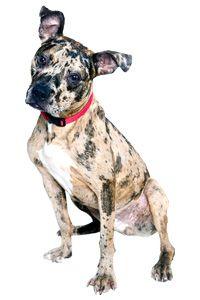 ASPCA   Ten Ways to Help End Dog Fighting