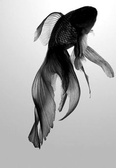 Fighting Fish = My first pet...I named him Karate.
