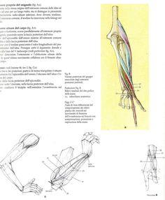 arm and hand anatomy