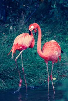 Flamingos. Little Miss C and I just love them.