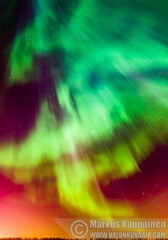 Revontulet / Aurora borealis. Valokuvaaja: Markus Kauppinen
