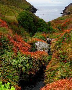 Dingle Co. Kerry, Ireland.....stunning photo